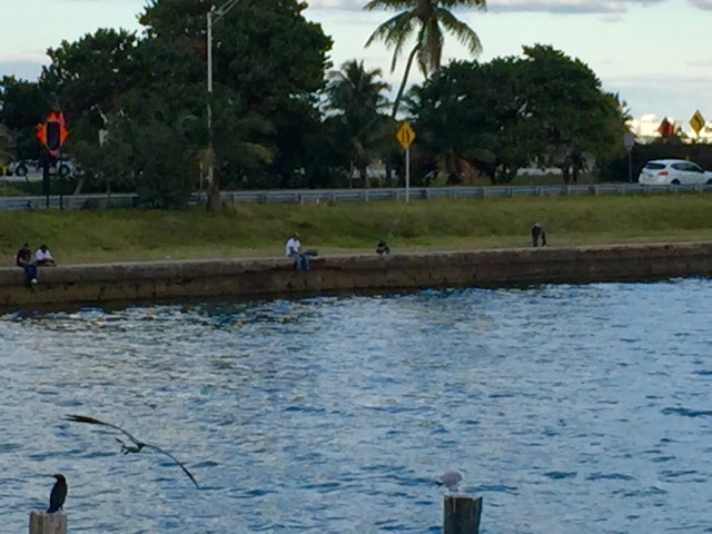 Fishin on a sunday afternoon almost like groovin for Biscayne bay fishing