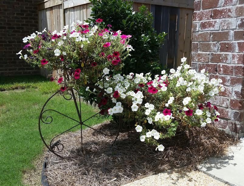 Bicycle Planter photo by Pat Starnes