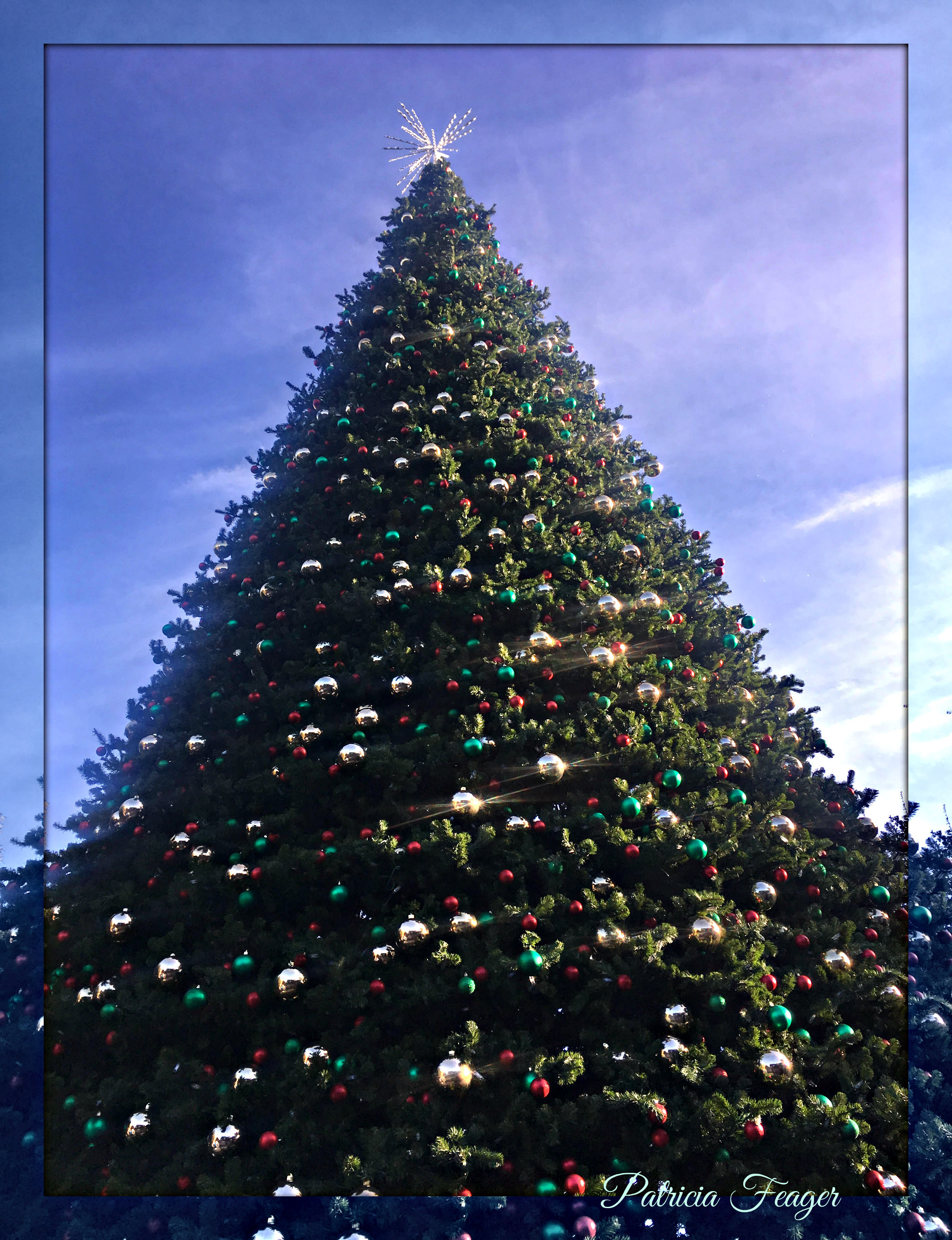 Oh Christmas Tree & Things I Don\'t Want to Miss