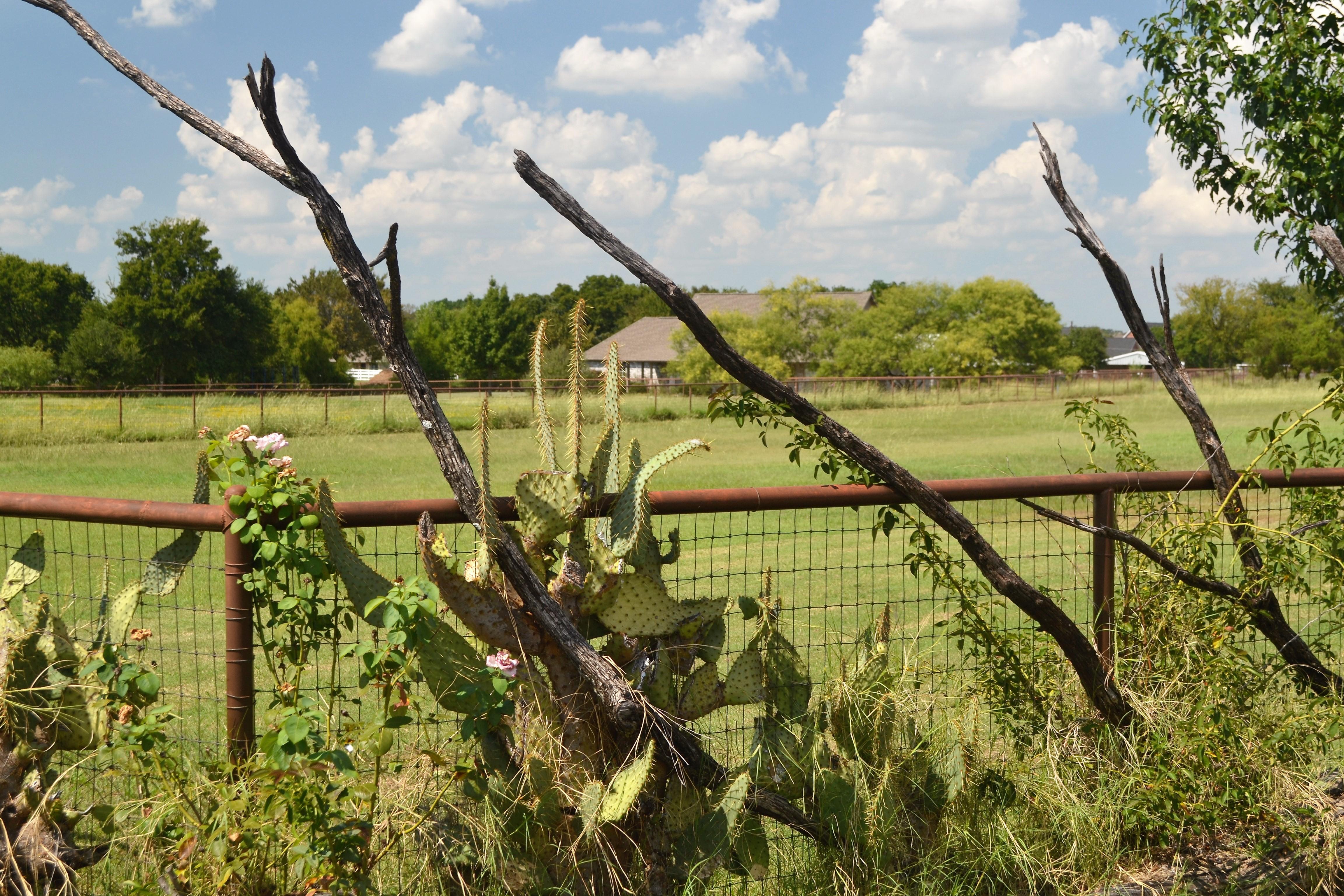 A Bird s Eye View of Flower Mound TX