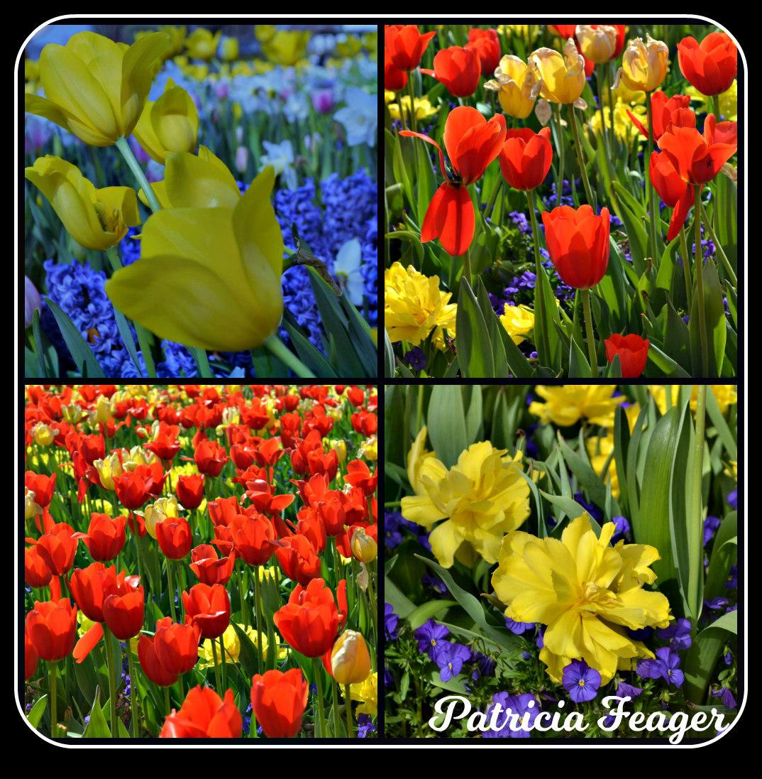 tiptoe through the tulips spring 2018