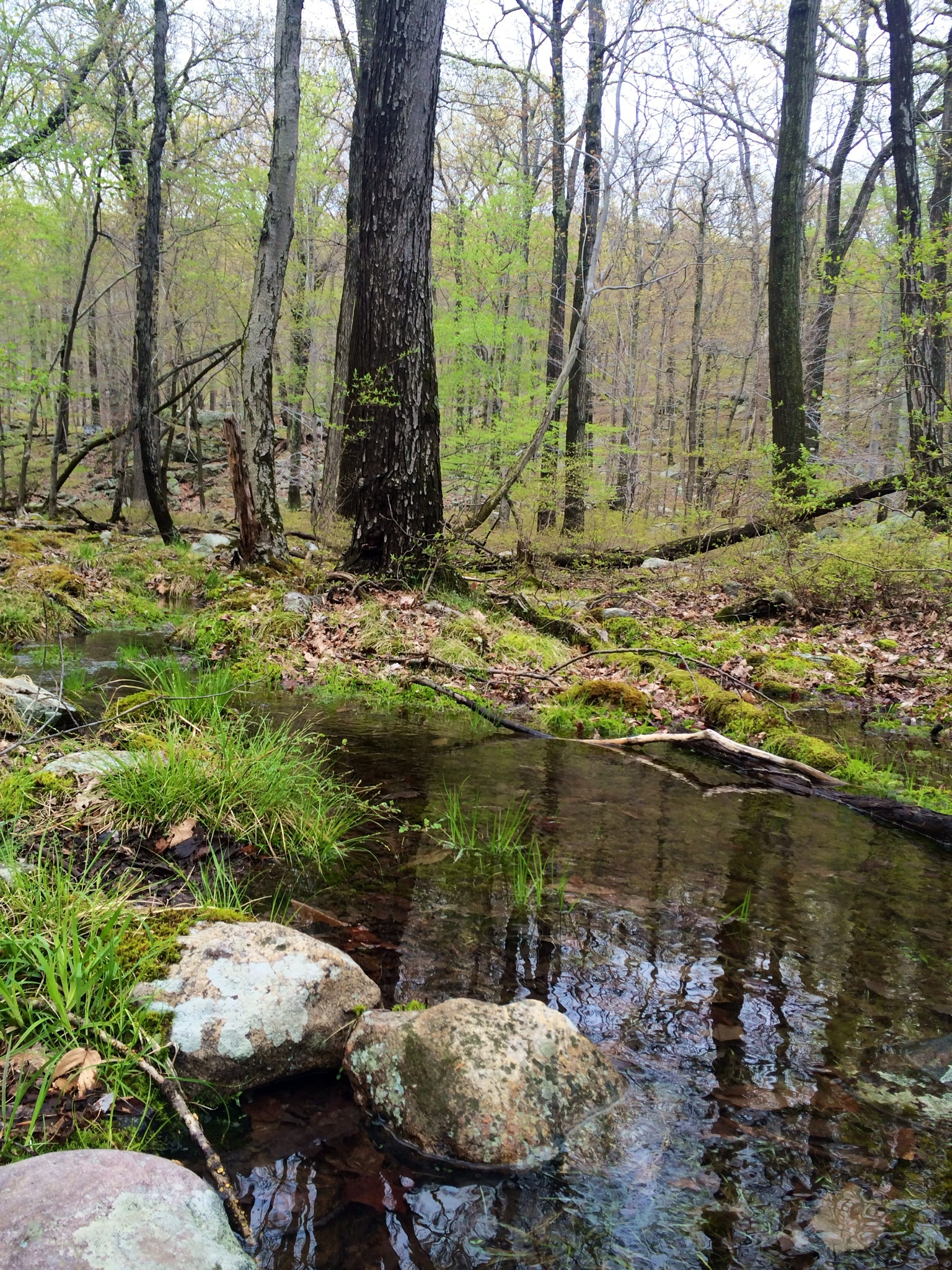 Exploring Harriman State Park In New York