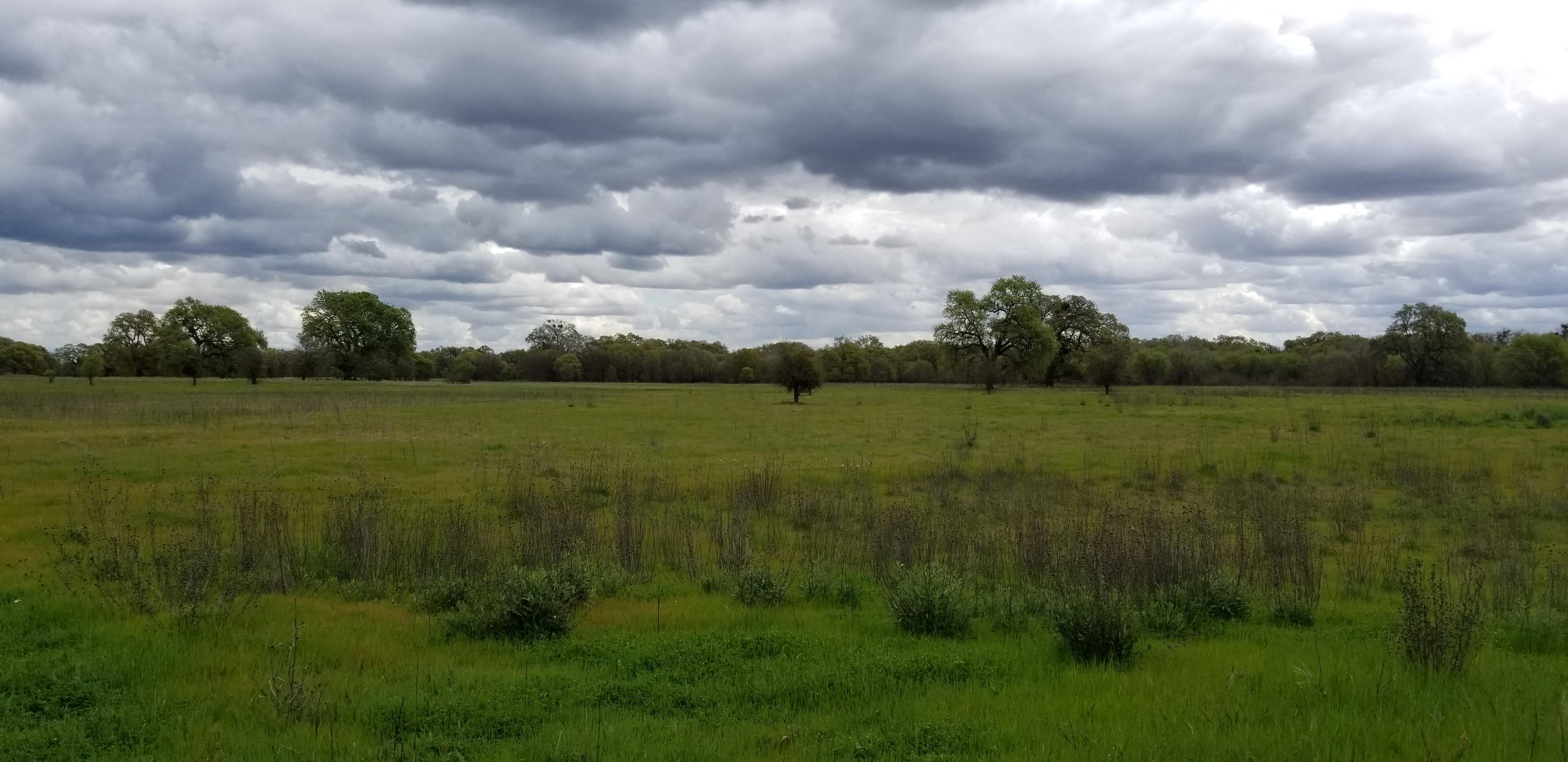 Cosumnes River Preserve, Elk Grove
