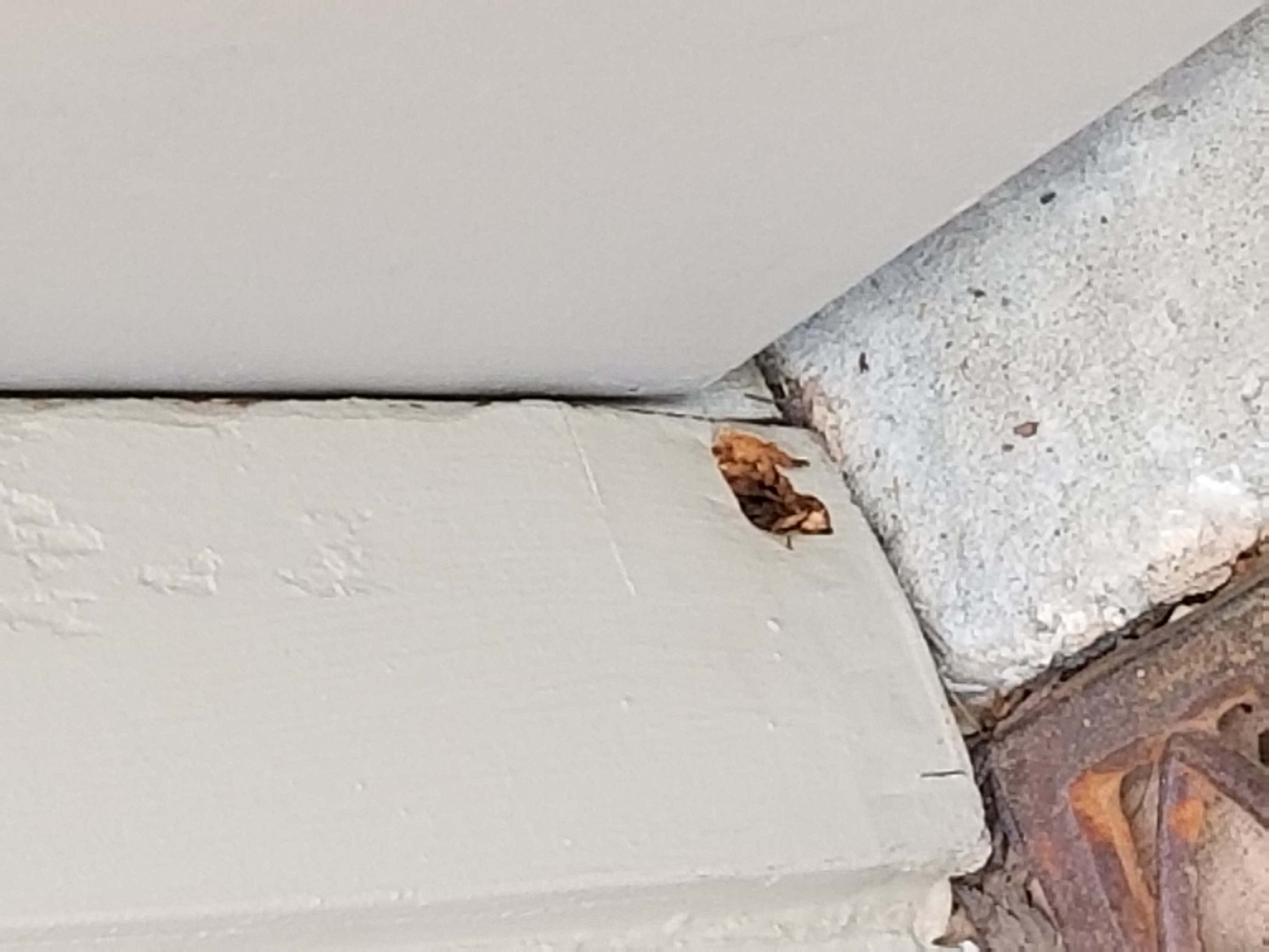 Dry rot in Casing