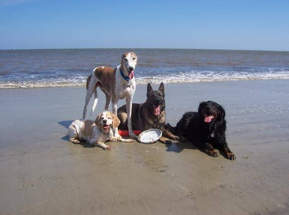 Park S Naples Florida Pet Friendly Condos On The Beach Realty