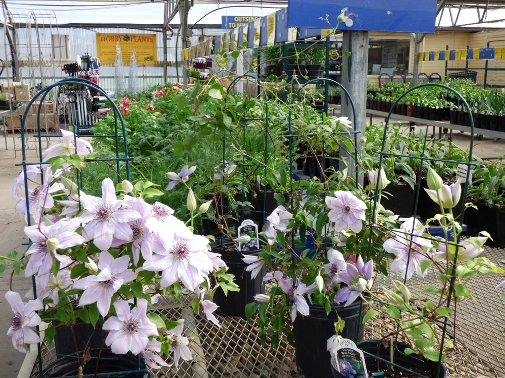 Lowe s flowers minot flowers healthy lowe s flowers lowe s pottery lowe s garden center minot nd mightylinksfo