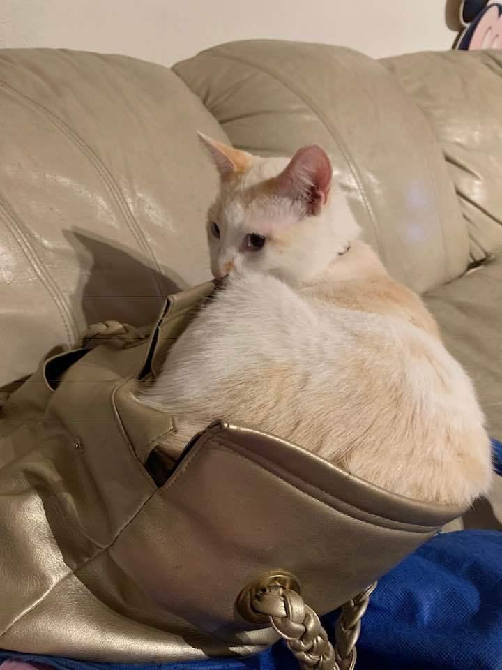 Cat Mauli gold purse image