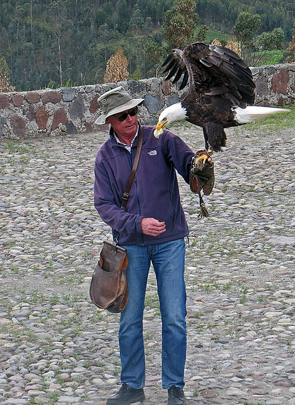 Bald Eagle & Falconer
