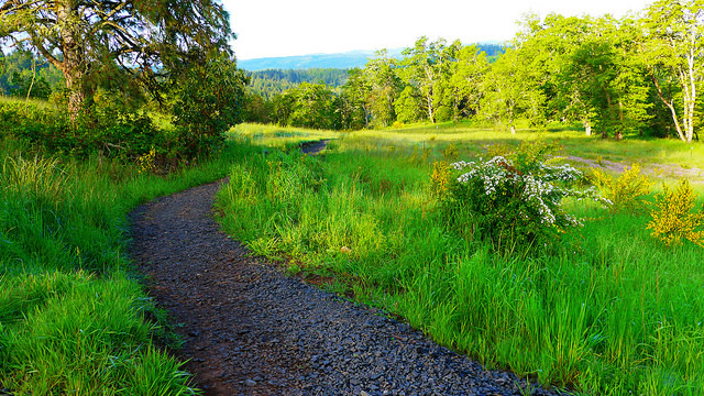 Wild Iris Ridge Trail in Eugene, Oregon