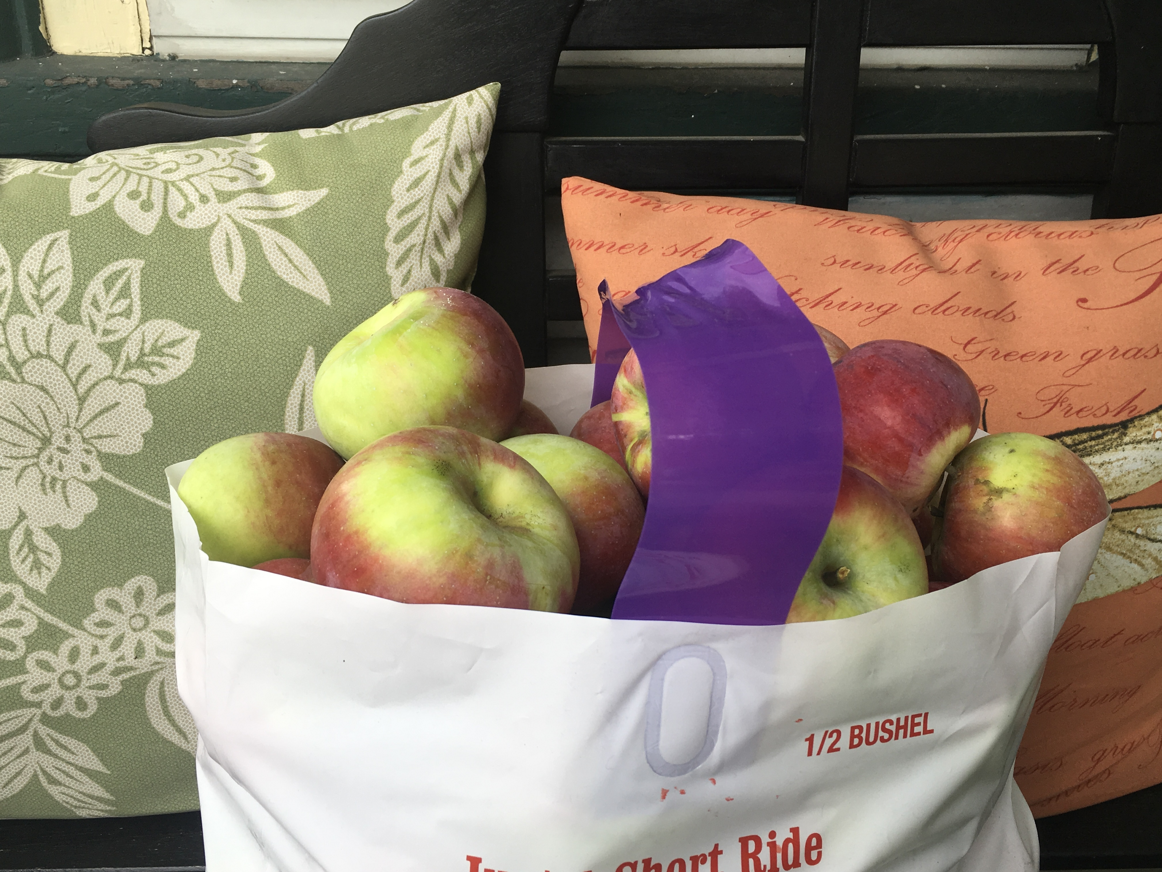 Pick of apples in a bag by Ray Stockwell, ZipperAgent