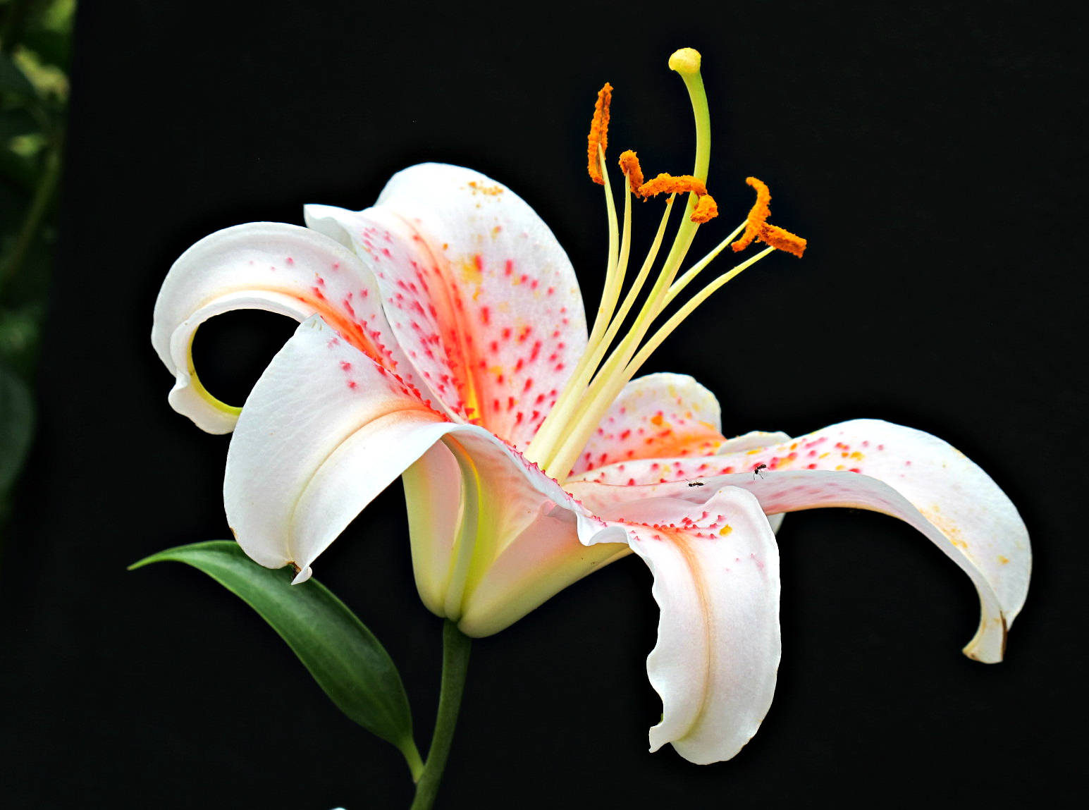 Kentlands photowalk lily img 4753 izmirmasajfo