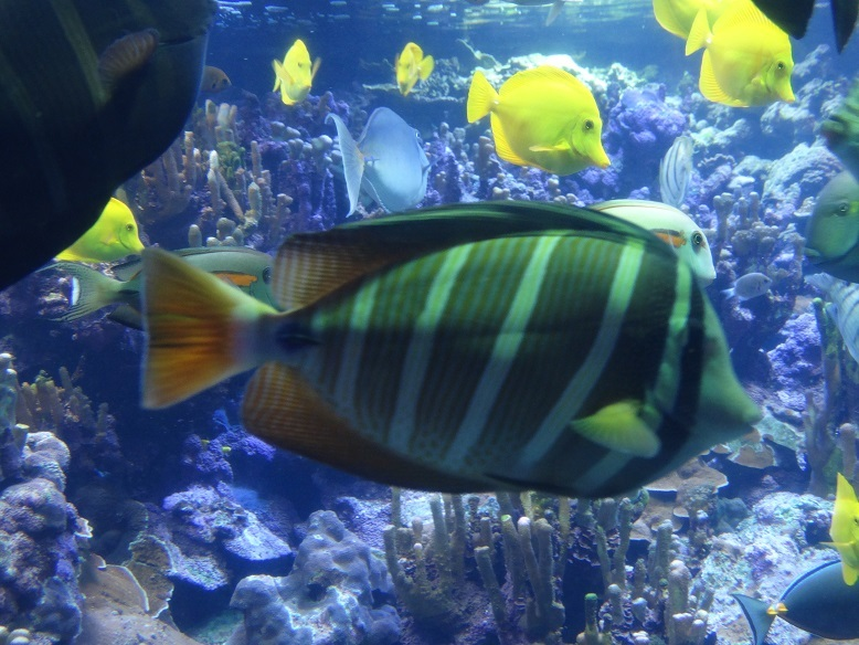 Fish at The Maui Ocean Center Maui Hawaii