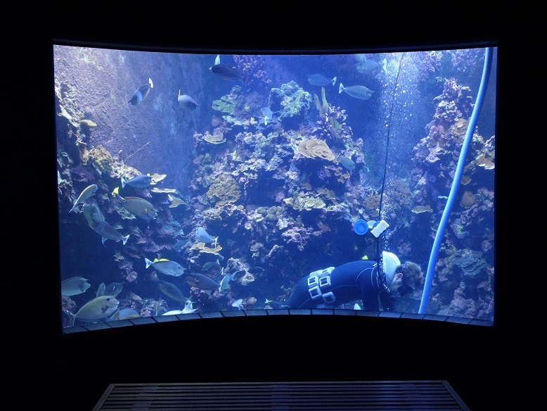 UNderwater aquarium Maui Ocean Center