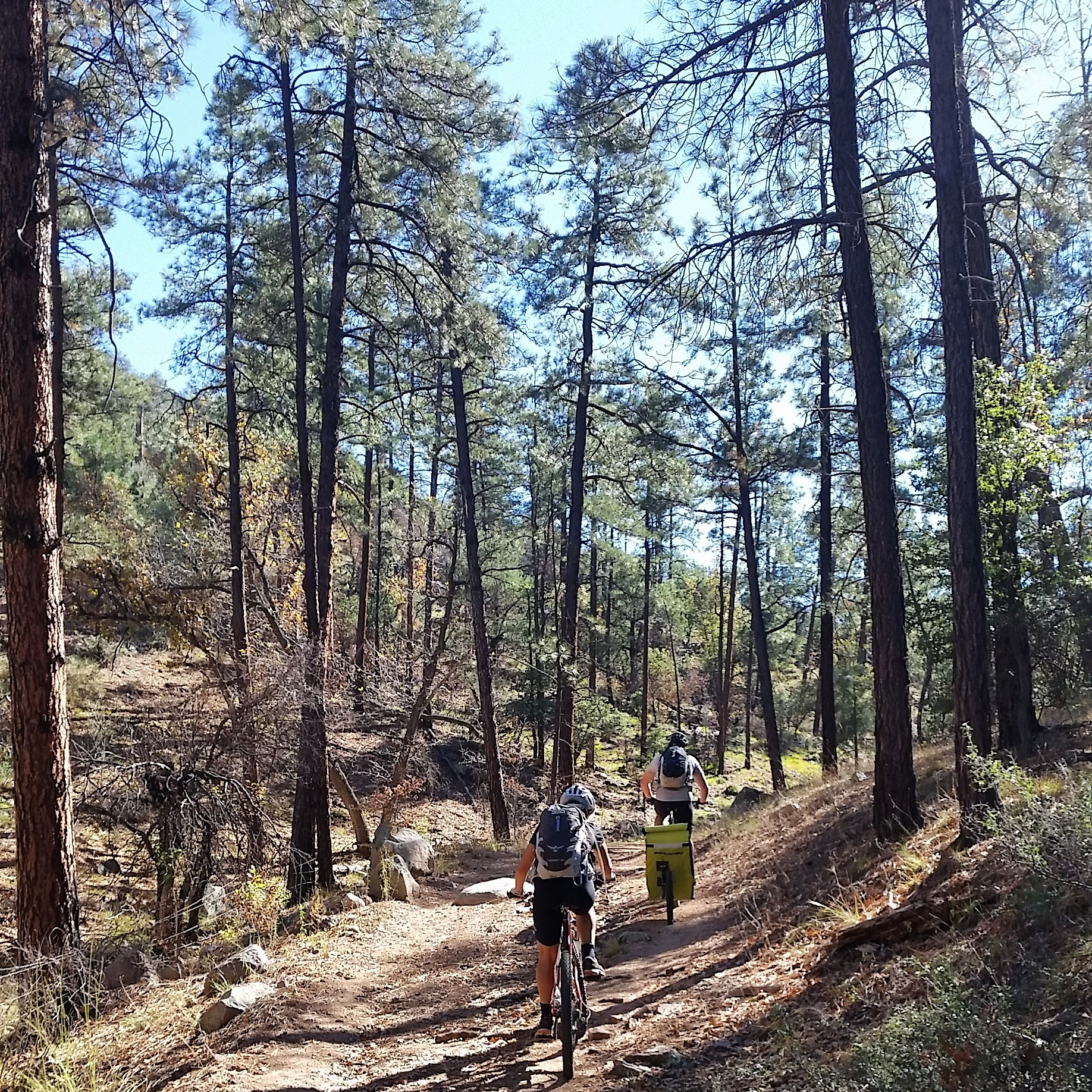 Enjoying a small climb among the pines