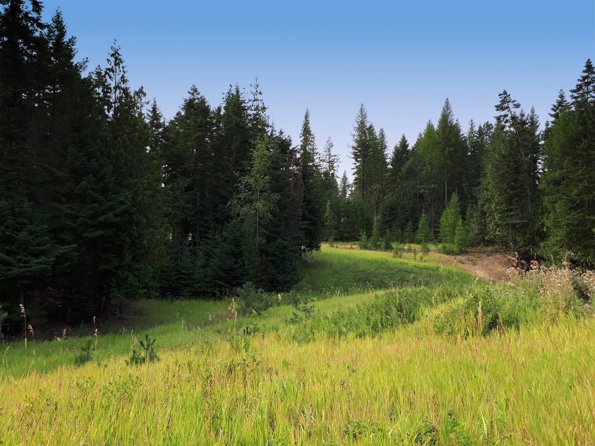 mix of trees and pasture