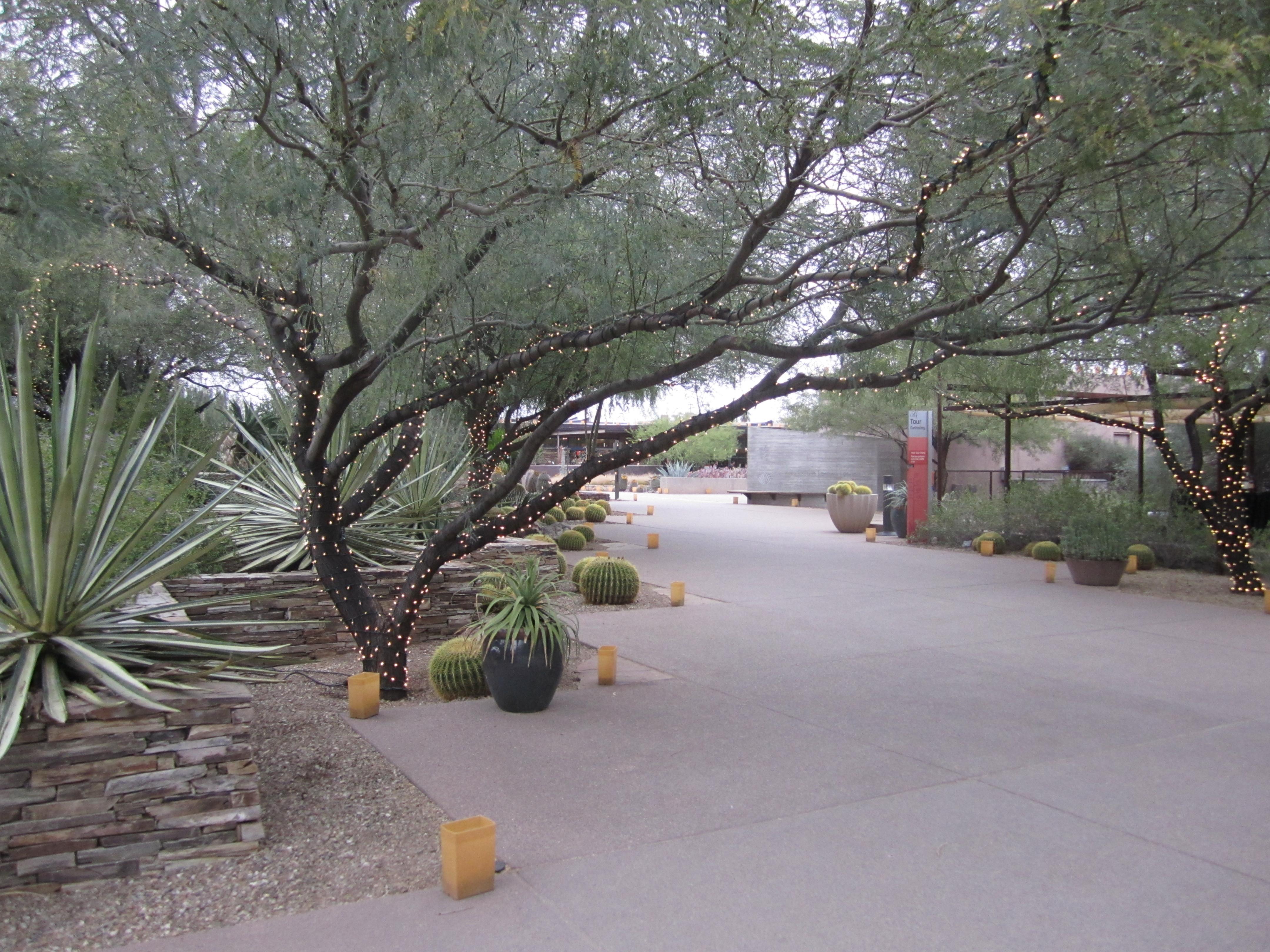 Desert Botanical Gardens Luminarias Tempe Tourism Tempe Events This Week Las Noches De Las
