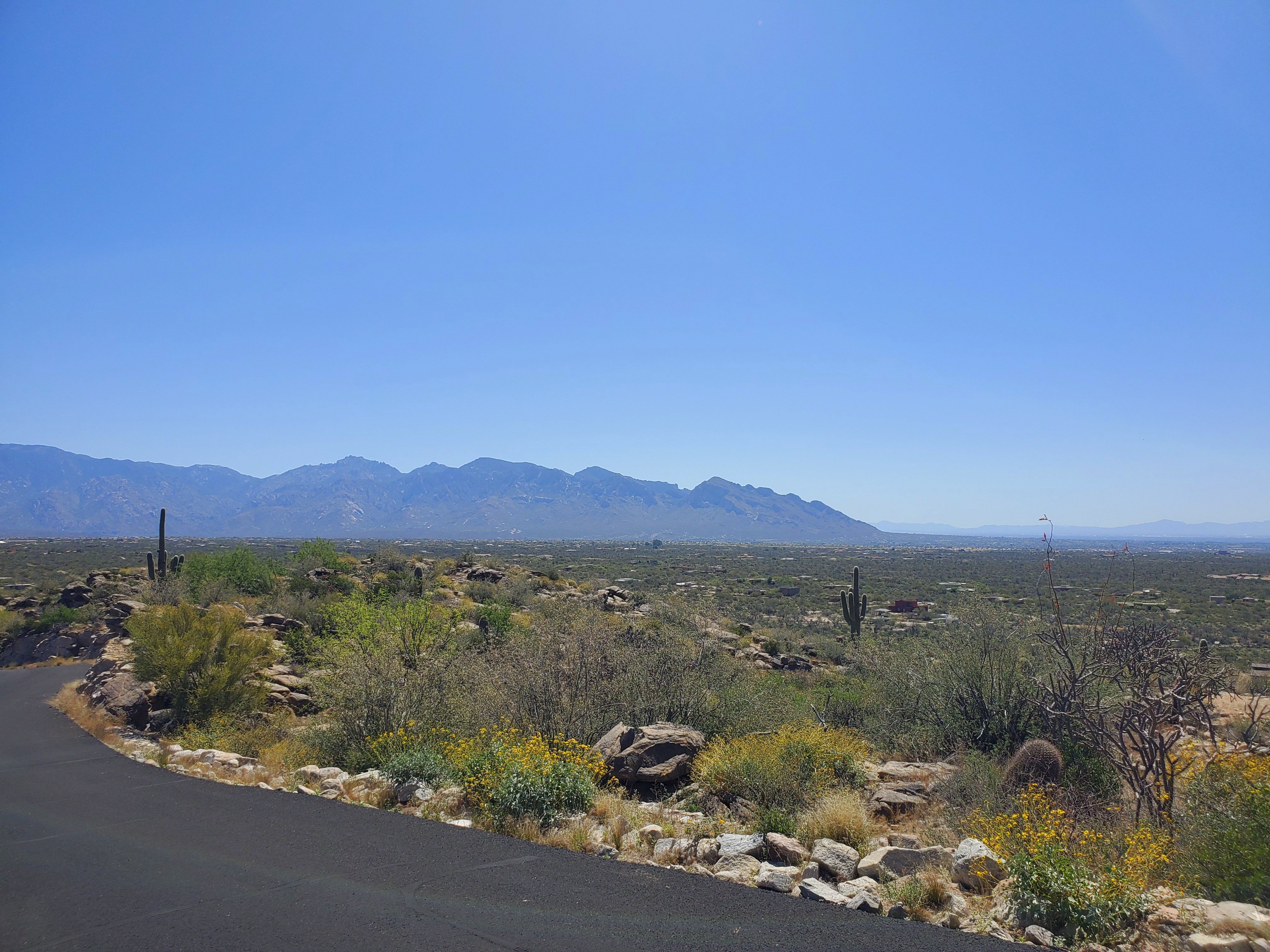 Catalina Mountain views from Saguaro Ranch