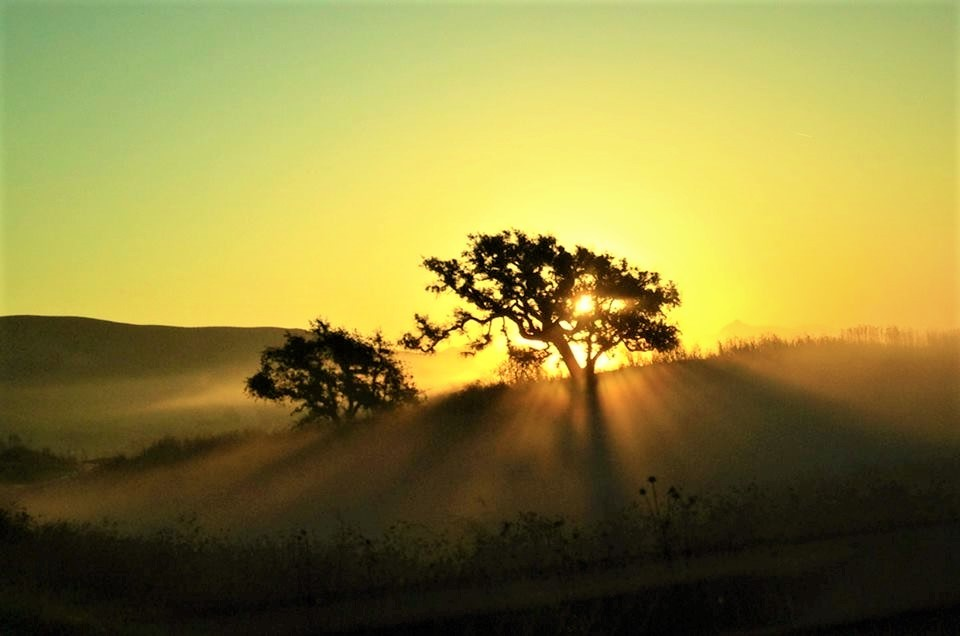 Sunrise in Gilroy California by Robert Swetz