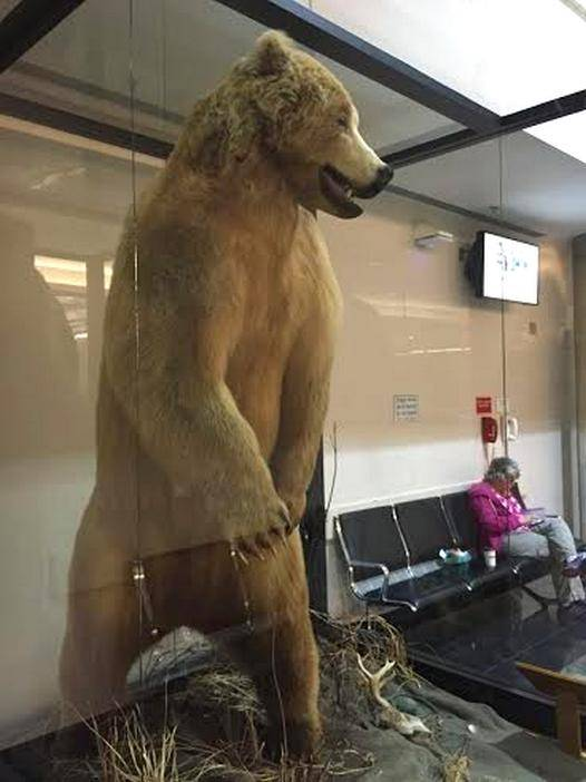 Alaska Bob Jumps From Seattle To Anchorage Alaska