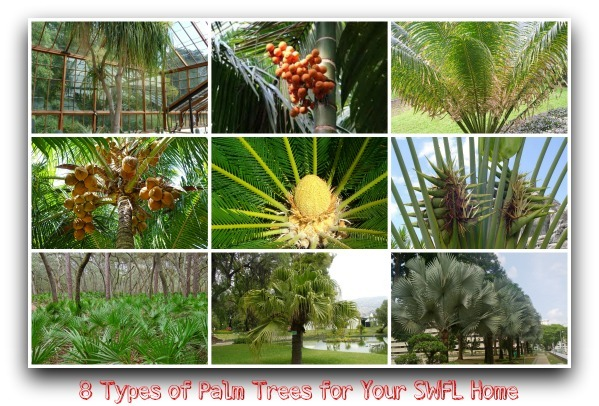 8 Types Of Palm Trees For Your Swfl Home
