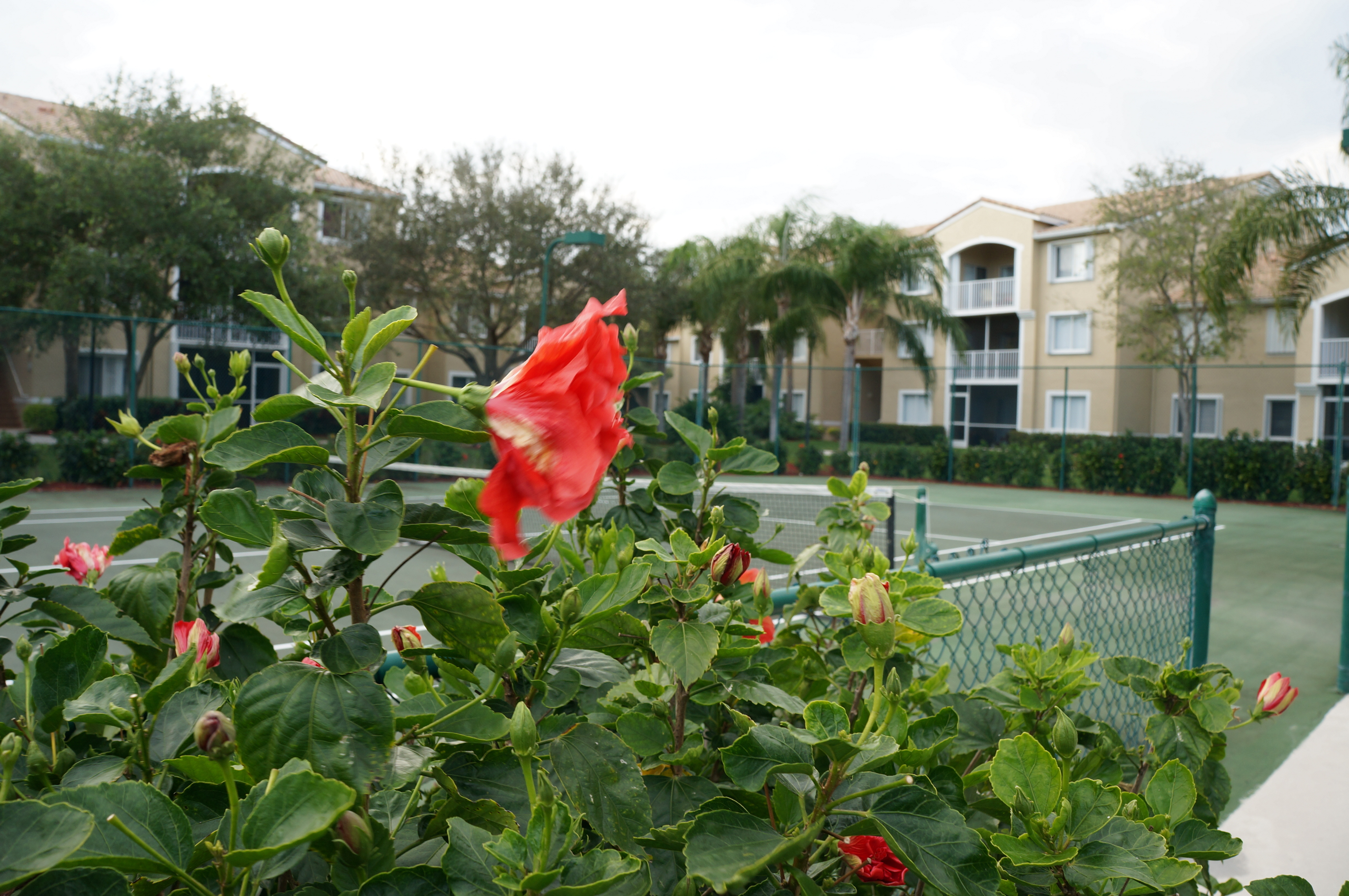 Lighthouse Cove Tequesta tennis courts