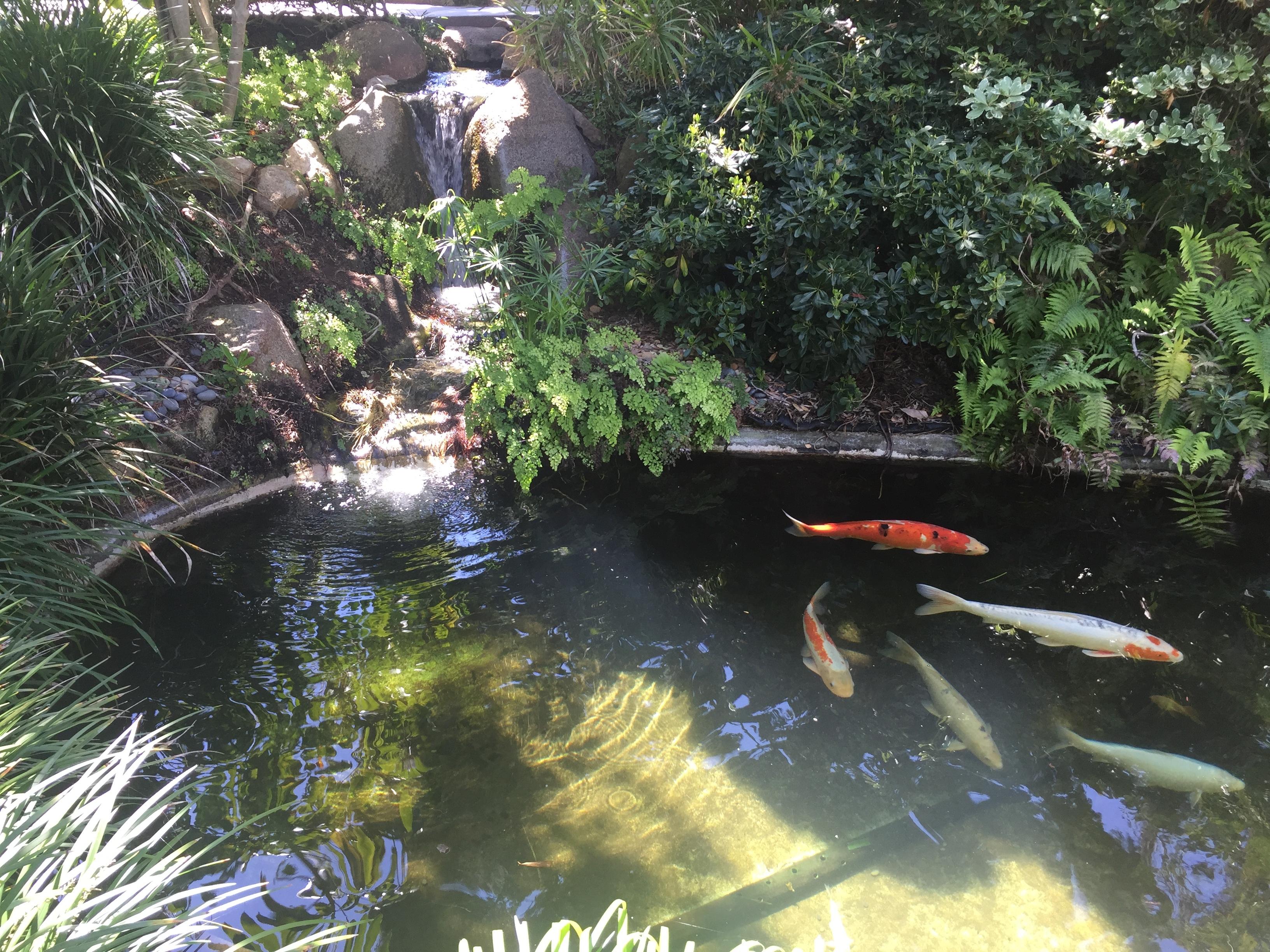 The Meditation Gardens In Encinitas Ca