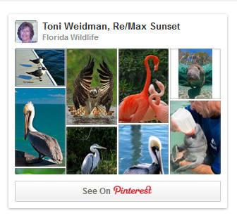 Pinterest Florida Wildlife Board-Toni Weidman
