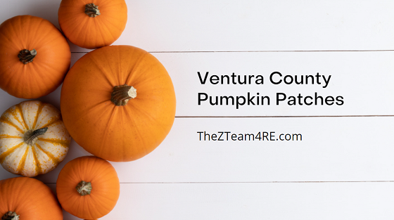 Do you still need a pumpkin to fulfill your Halloween jack-o-lantern dreams? Try one of these Ventura County pumpkin patches.