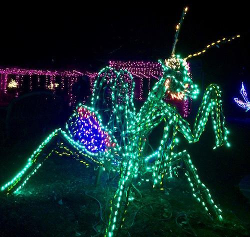 Christmas lights display of a praying mantis