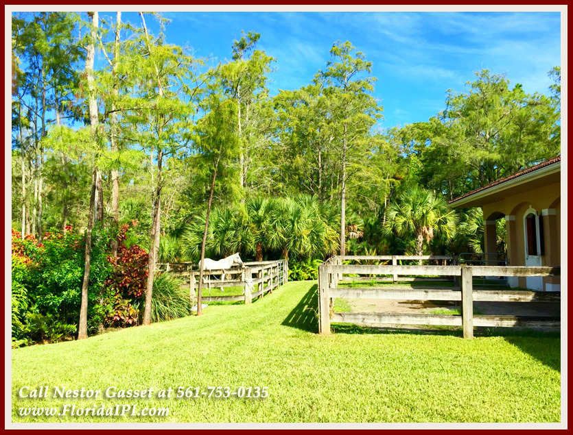 Equestrian Homes For Sale in Fox Trail Loxahatchee FL - 1092 Clydesdale Dr Loxahatchee FL 33470 - Paddock, Turnout, & Barn
