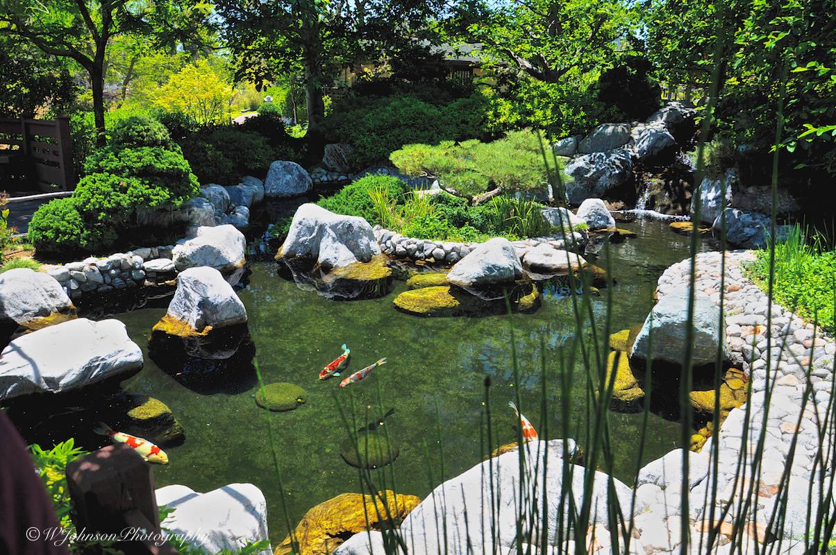 San go pond and garden garden ftempo for Koi pool water gardens thornton
